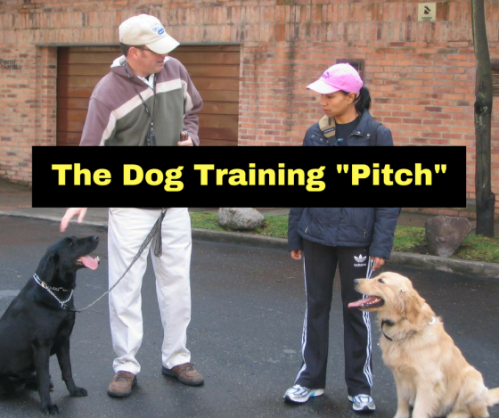 The Dog Training Pitch